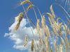 Курск: День поля в фермерском хозяйстве Лагутиных
